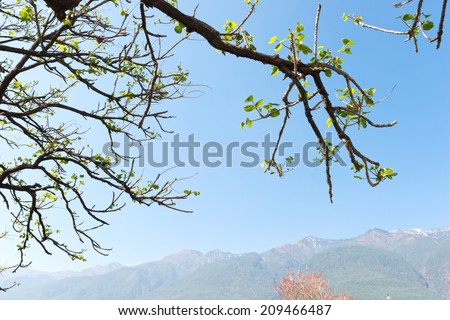 Leaves in early spring. Located in South Gate of Dali old town. Dali Bai Autonomous Prefecture, in northwestern Yunnan province, China. - stock photo