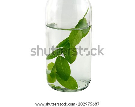 Leaves in glass on white background - stock photo