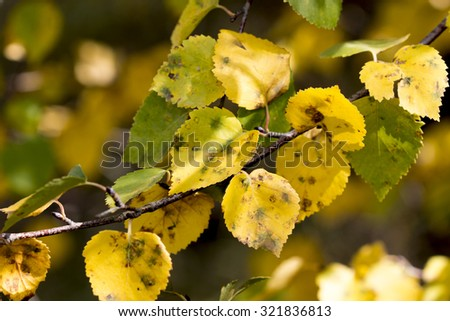 leaves in the autumn forest in sunny weather - stock photo