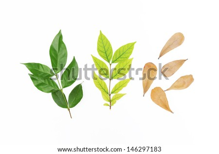 leaves in three colors - stock photo