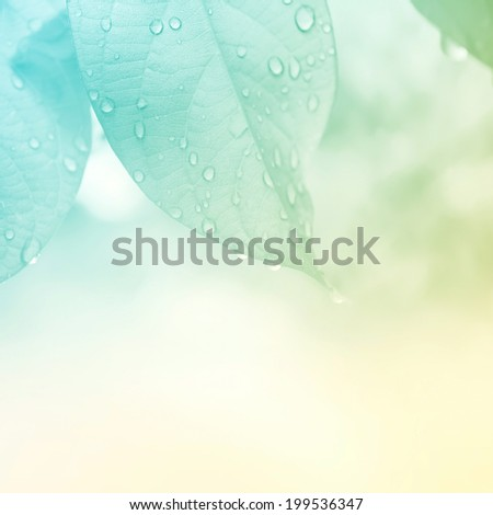 leaves in vivid color style for background - stock photo