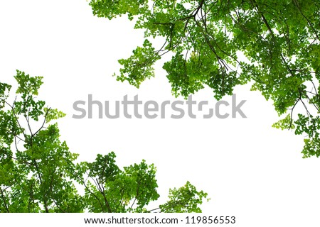 Leaves isolated on white - stock photo