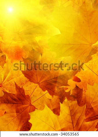 Leaves of a tree a maple in a sunlight - stock photo
