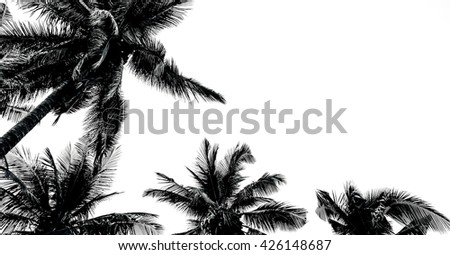 Leaves of coconut tree isolated on white background.Palm leaves isolated on white.Coconut palm trees against on white background.Leaves of palm tree isolated on white background. - stock photo