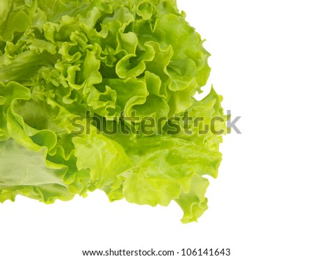 Leaves of green fresh lettuce, isolated on a white background. - stock photo