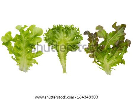 Leaves of lettuce on white background - stock photo
