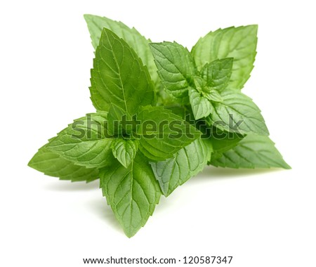 Leaves of mint - stock photo