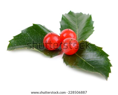 Leaves of mistletoe with berries isolated on white - stock photo