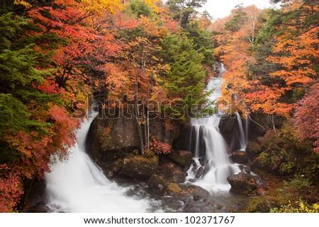 Leaves of Nikko National Park - stock photo