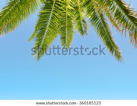 Leaves of palm tree on blue sky - stock photo