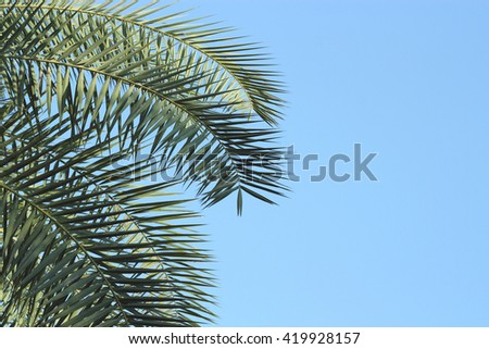 Leaves of palm tree on sky background - stock photo
