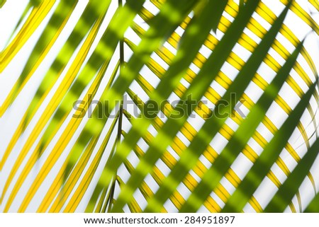 Leaves of palm tree  out of focus - stock photo