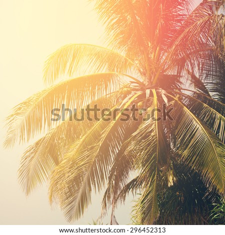 Leaves of Palm Trees in Sun Light, Background Toned under Retro. Holiday Travel Card - stock photo