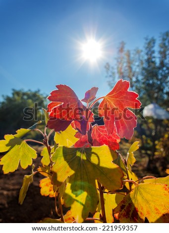 Leaves of the plant in the light of a gentle sunny morning - stock photo
