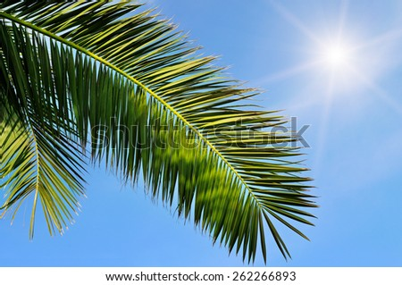 leaves of tropical palm trees and blue sky - stock photo
