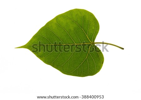 leaves on a white background. - stock photo