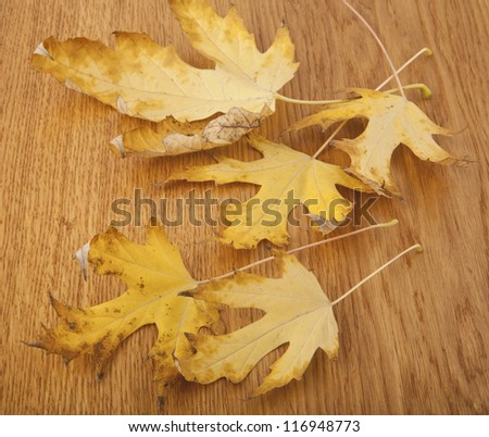 leaves on a wooden table - stock photo