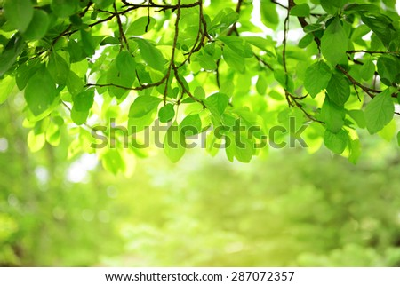 leaves on the branches,nature green sunlight backgrounds. - stock photo