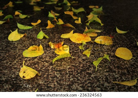Leaves on wet ground after hard rain. - stock photo