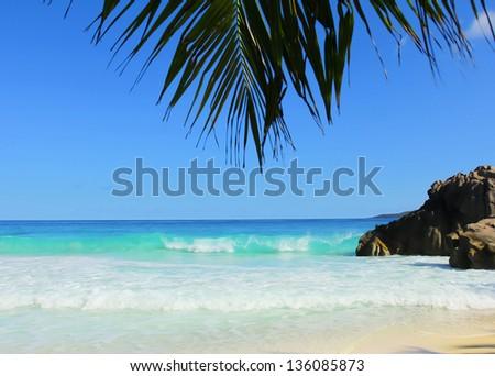 Leaves Palm Stones - stock photo