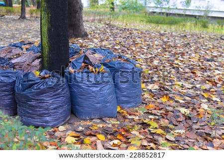 leaves rake in the row - stock photo