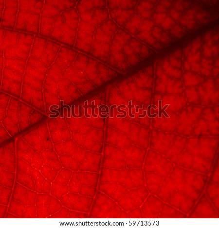 Leaves, red - stock photo