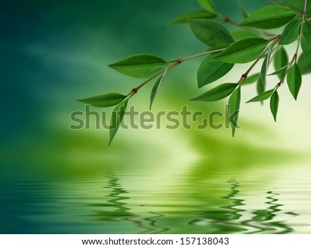 Leaves reflecting in water - stock photo