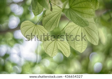 Leaves Selective Focus. Focus on edge of leaf with soft green hue bokeh in background - stock photo