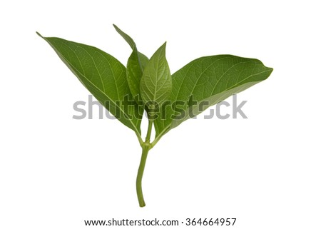Leaves sprout isolated on white background - stock photo
