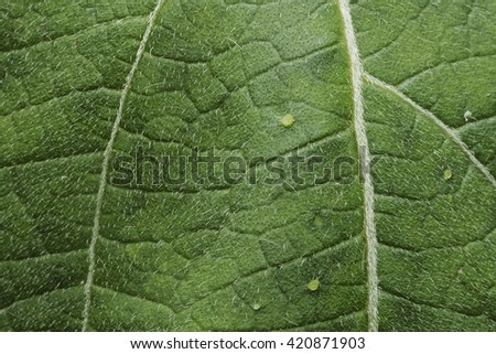 leaves texture background - stock photo