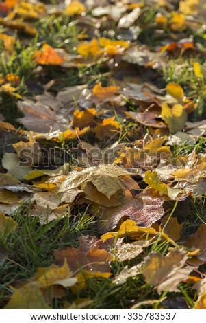 Leaves with dew - stock photo