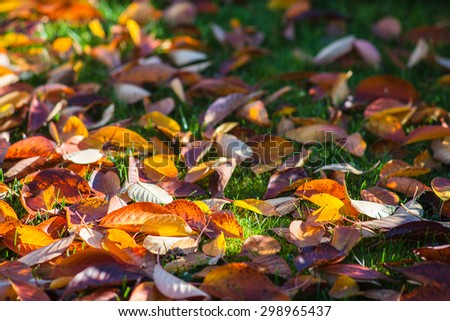 Leaves with vibrant colors falling on the green grass, in autumn sunlight. - stock photo