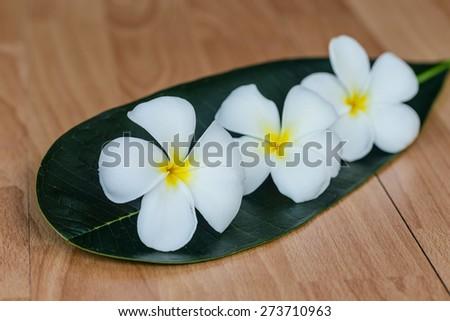 Leelavadee (Plumeria) tropical flower wooden background - stock photo