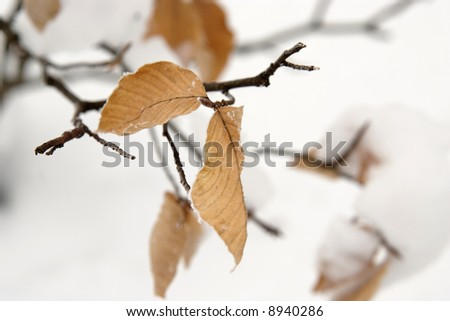 Left leave on a branch in winter - stock photo