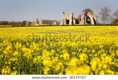 Leiston Abbey Suffolk with Rapeseed Field - stock photo