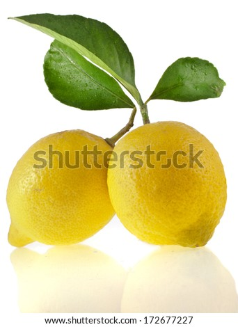 Lemon branch with green leaves  isolated on a white background  - stock photo