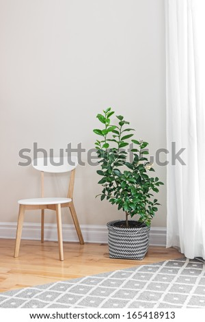 Lemon tree and wooden chair in a bright room. - stock photo