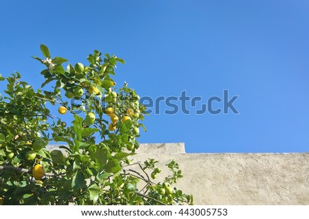 Lemon tree with fruits, stone wall and blue sky in Mallorca, Balearic islands, Spain in early April. - stock photo
