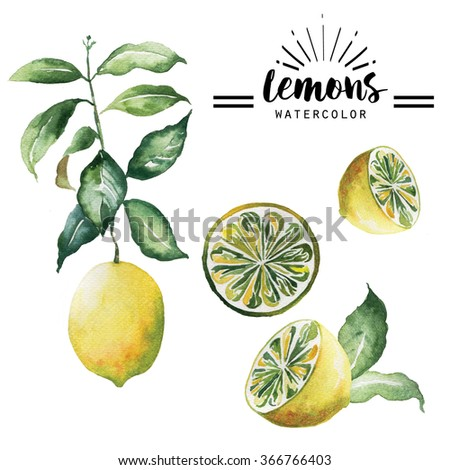 lemon watercolor hand drawn isolated ingredient  organic nature on white background  - stock photo