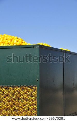 Lemons are loaded onto trailers at a California processing plant - stock photo