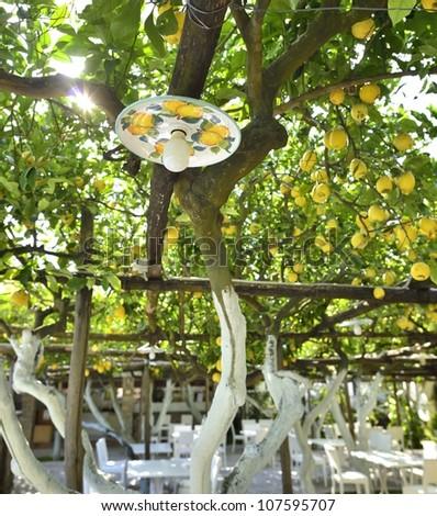 Lemons trees on Capri Island - stock photo