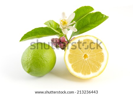 Lemons with leaves and flower on a white background - stock photo