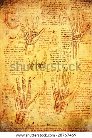 leonardo da vinci antomy hands - stock photo
