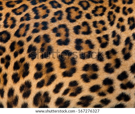 Leopard fur background - stock photo