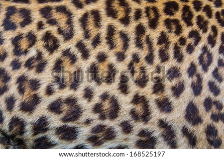Leopard fur background. - stock photo