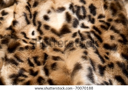 Leopard fur perfect use as background - stock photo