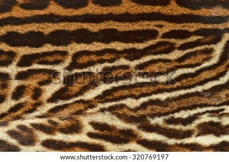 leopard fur texture - stock photo