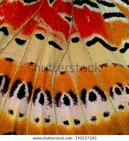 Leopard lacewing butterfly wing skin in close up of its texture - stock photo