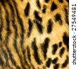 leopard leather texture - stock photo