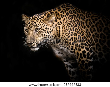 Leopard portrait. - stock photo